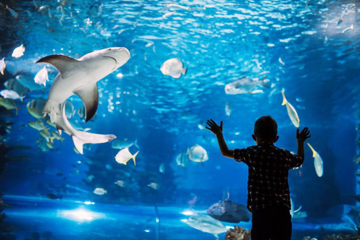 Serious boy looking in aquarium with tropical fish