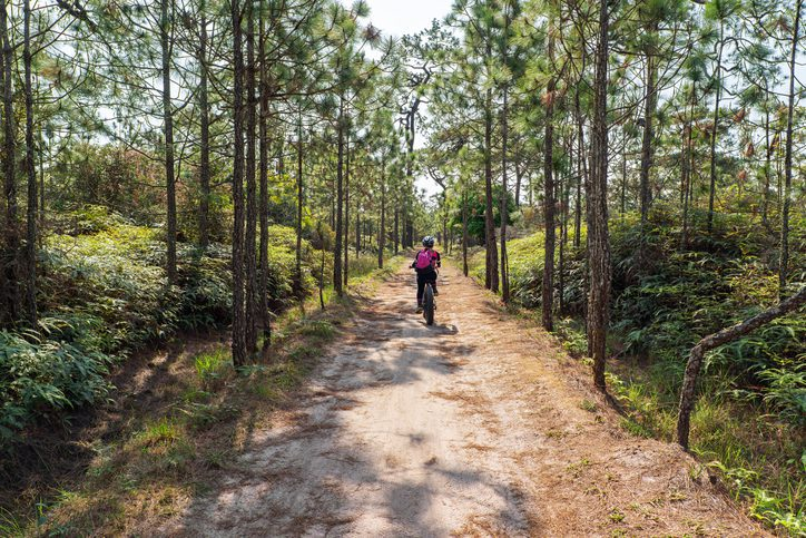 female cyclist cycling on small dirt road through green pine forest on the mountain.